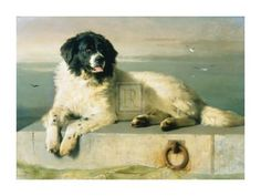 A Distinguished Member Of The Humane Society Art Print by Edwin Henry Landseer at Art.com