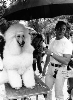 DOG'S número 6 ©gloriagiménez