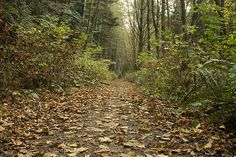 A leafy pathway in Watershed Park in Delta BC