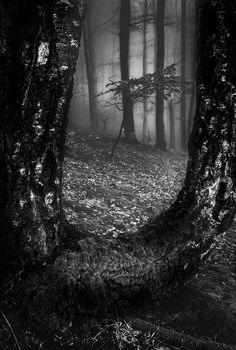 Confused forest (2)