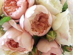 Is it possible to grow David Austin Roses in Michigan? If I don't know how to grow roses?