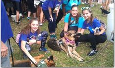 Coco and Lacy (both German Shepherds & Therapy Dogs) at the Fort Lauderdale 2016 Walk for the Animals.http://cocogermanshepherddog.eyvr.com/featured/2016-human-society-walk-animals/