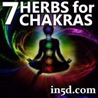 The vibrational qualities of plants can assist in balancing, relaxing, and energizing your aura and chakras. Each member of the plant kingdom has a unique gift to offer and can support you on your journey of manifesting your highest path on earth. Allowing herbal energies to assist your personal growth can help you connect to the beauty of nature within and around you.