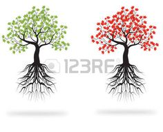 23653093-whole-green-and-red-tree-with-roots-isolated-white-background.jpg (450×366)