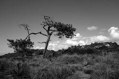 Torrey Pine #sonyrx100