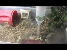 Repti Fogger vs Homemade - YouTube