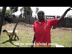 Ovca zlepšuje život kenskej rodine   Pani Wangui z komunity Karunga vo videu hovorí o svojom živote a ako ju potešila ovca darovaná cez ČloveČiny. Počas festivalu Jeden Svet ste mali možnosť zakúpiť si hračky z pravej ovčej vlny vyrobené práve ženskou komunitou Karunga. Hračky mali veľký úspech, môžete si ich prostredníctvom o.z. Človek v ohrození kúpiť aj v priebehu roka alebo podporiť ČloveČiny. Rodin, Kangaroo, Animals, Baby Bjorn, Animales, Animaux, Animal Memes, Animal, Animais