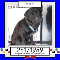 ***EXTREMELY URGENT*** MAX is due for EUTHANASIA TODAY, WEDNESDAY, JUNE 17, 2015!!! Can you save him?