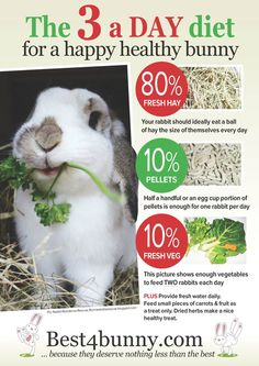 The 3 a day diet for a happy healthy bunny! Bella has lots of excessive hay: meadow hay, Timothy hay  Readi grass; a leaf of kale, a bowl of herbs and a few handfuls of grass and a couple homemade treats (which are as good as pellets)! Bella also chews on apple and willow sticks...