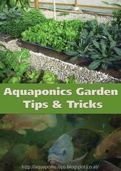 IBC of Aquaponics Manual by Nick Bovery - issuu