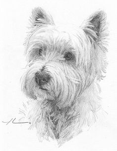 Westie Dog Drawing by Mike Theuer, a professional portrait artist.