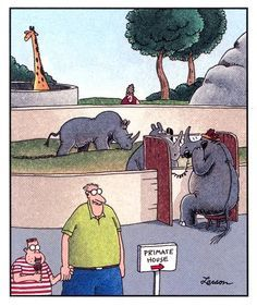 Primate House The Far Side by Gary Larson Gary Larson Cartoons, Gary Larson Comics, Far Side Cartoons, Far Side Comics, Funny Cartoons, Haha Funny, Funny Jokes, Hilarious, Funny Sarcasm