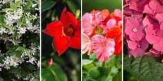 Τα ομορφότερα λουλούδια που μπορούμε να φυτέψουμε σε σκιερά μέρη με λίγο ήλιο, σε κήπο και σε γλάστρα, και να μας δώσουν χρώμα και πλούσια ανθοφορία. Indoor Plants, Home And Garden, Rose, Flowers, Gardening, Decoration, Lawn And Garden, Inside Plants, Decor