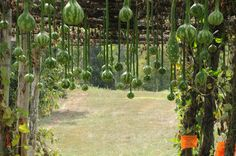 Fall photo of Incredible gourd garden