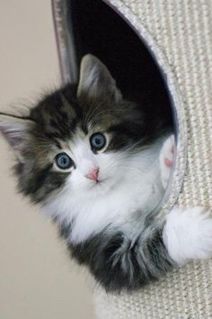 Wide-eyed and so cute!