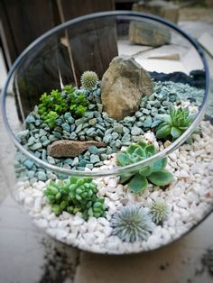 Tropical Terrariums, Succulent Terrarium, Dish Garden, Bottle Garden, Cactus Y Suculentas, Miniature Fairy Gardens, Planting Succulents, Container Gardening, Boho Decor
