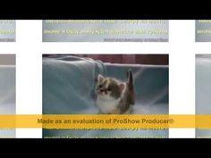 Домашняя кошка — млекопитающее семейства кошачьих отряда хищных