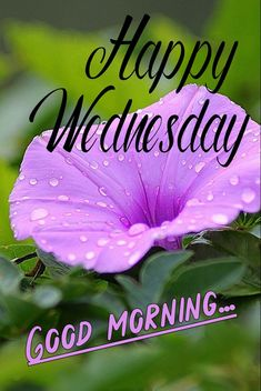 Good Morning Messages Friends, Good Morning Msg, Good Morning Wednesday, Good Morning Flowers, Good Morning Images, Good Morning Quotes, Wednesday Wishes, Happy Wednesday, Colorful Flowers