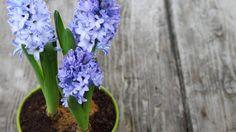 Die 96 Besten Bilder Von Pflanzen Garden Plants Deck Und Gardens