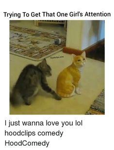 Trendy Funny Pets Humor Hilarious So Cute Ideas Animal Memes Clean, Funny Animal Memes, Funny Animals, Cute Animals, Funny Babies, Funny Kids, Funny Cute, Hilarious, Crazy Funny