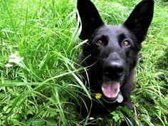 I love run in the grass