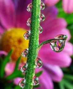 bloem met waterdruppeltjes