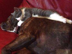 Roxy & Kitty | Pawshake