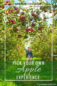 Picking your own apples from an apple farm is the perfect bucket list item and worth taking a weekend road trip to do. There are always more things to do for the kids plus the joy of being outside and getting apples as fresh as you possibly can. There are