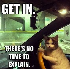 24 Funny Cats and Kittens Pictures | Funny Animals Funny Cat | DomPict.com