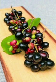 """Syzygium Cumini - Syzygium Sp - Eugenia Cumini ... """"Coppeng, Jamblang, Duwet, Jambu Keling, Jamun, Jambolan, Jambul, Java Plum, Black Plum ..."""