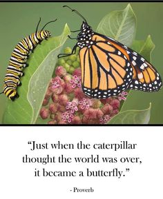 Just when the caterpillar thought the world was over, it became a butterfly!