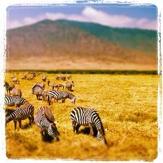 Ngorongoro Crater in #Tanzania instagr.am/p/jBUd7/ #frifotos #gadv #travel EXOTIC