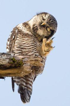 Waaaaait a minute  #Owl