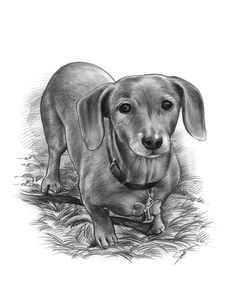 Pet / Dog Sketch Portait from a photo. Pet memorial gift idea from GiveAmasterpiece.com