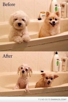 Before And After Bath Time