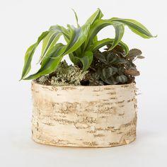 Loving this natural planter.  - bouleau