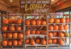 Fall Pumpkin Display at the Farmer's Market Pumpkin Display, Fall Snacks, Autumn Aesthetic, Autumn Cozy, Happy Fall Y'all, Hello Autumn, Fall Pumpkins, Autumn Inspiration, Fall Halloween