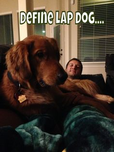 """Define lap dog...................yep our Sophie thinks/is a lap dog and sometimes a """"shoulder"""" dog................just ask my hubby!"""
