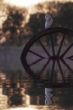 Beautiful Places in the world / reflections / owl gif