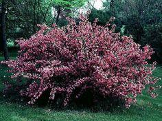 Risultati immagini per piante da fiore resistenti al freddo