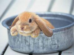 Google Afbeeldingen resultaat voor http://www.wallcoo.net/animal/rabbit/images/%255Bwallcoo_com%255D_Lovely_rabbit_Picture_1da033003s.jpg