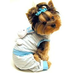 Love all our YORKIES.