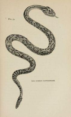 Types of animal life. - Biodiversity Heritage Library