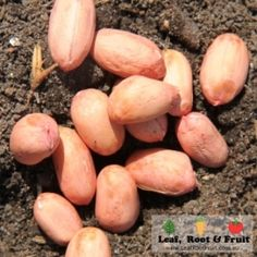 How to Grow Peanuts - Leaf, Root & Fruit Gardening Services Hawthorn