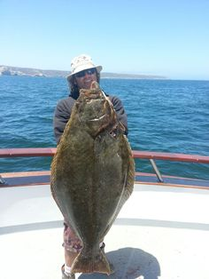Daniel gotshall california halibut paralichthys for California halibut fishing