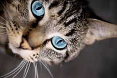 Bunting Behavior in Cats and Felines