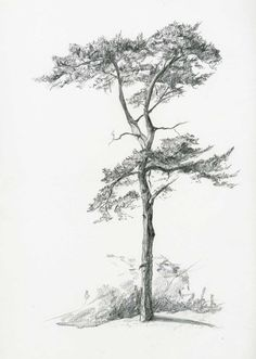 Bleistiftzeichnung – - New Sites Landscape Sketch, Landscape Drawings, Landscape Art, Landscape Paintings, Tree Pencil Sketch, Tree Drawings Pencil, Pencil Sketching, Plant Sketches, Tree Sketches