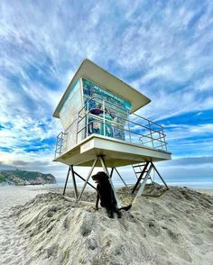 """San Luis Obispo Guide on Instagram: """"We'd be so lucky to find a dog like PJ that loves the beach as much as we do! 🐾🏖️ As part of our Feature Friday series today we're…"""""""