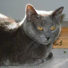 Chartreux Cats  Ideal Human Companions  Families with children Singles with other pets First-time cat owners Chartreuxs on Catster  419 cats | see profile pages  ADD YOURS  Trademark Traits  Super sweet and affectionate to their owners Extremely quick reflexes and athletic Water-resistant top coats Enjoys traveling