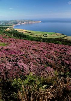 Peat Moorland of the North York Moors near the coast at Ravenscar